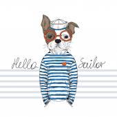 Francia bulldog tengerész