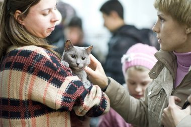 Volunteer shows cat from homeless shelter at the exhibition