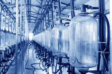 glass milk storage tank in a milking workshop