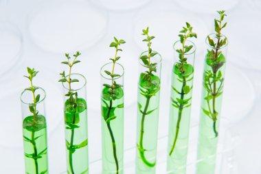 Genetically modified plants