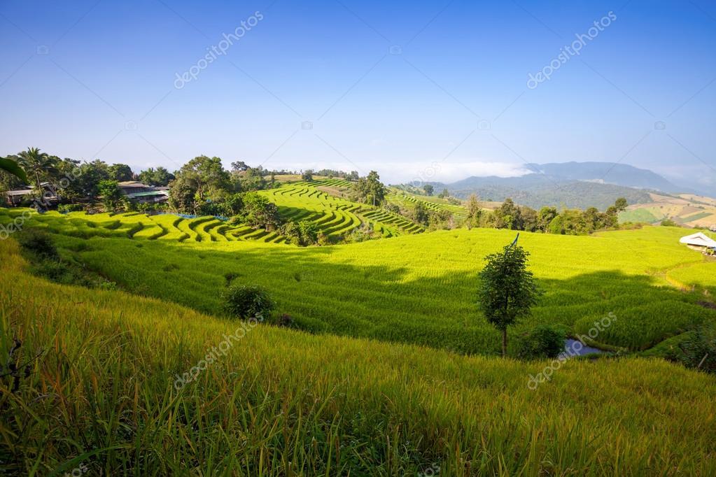 Green Terraced Rice Field in Chiangmai, Thailan