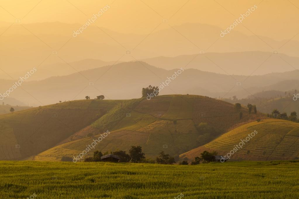 Hut in green terraced rice field during sunset at Chiangmai, Tha