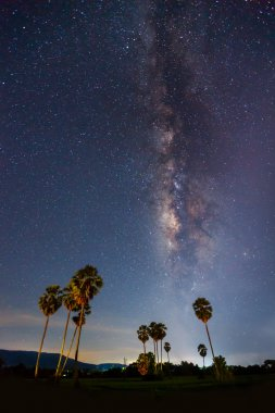 Silhouette of Sugar Plam Tree and Milky Way