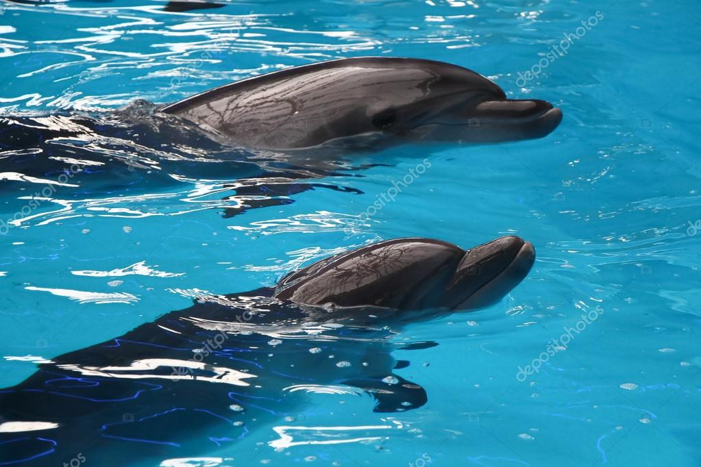 two young gray dolphins