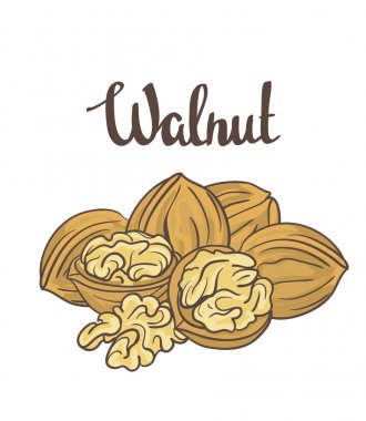 Cartoon ripe walnuts