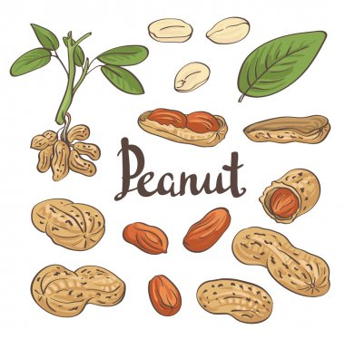 Peanuts, kernels and leaves