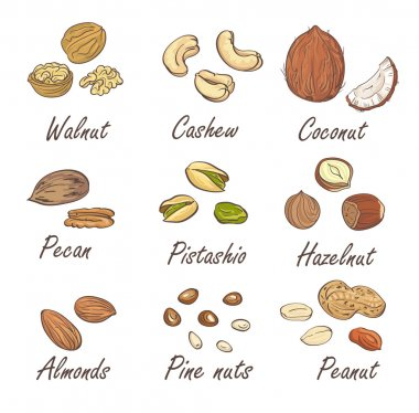 hand sketched nuts