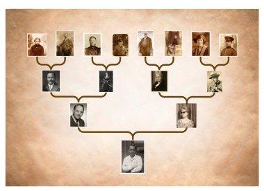 """Картина, постер, плакат, фотообои """"дерево семейной истории """", артикул 98410462"""