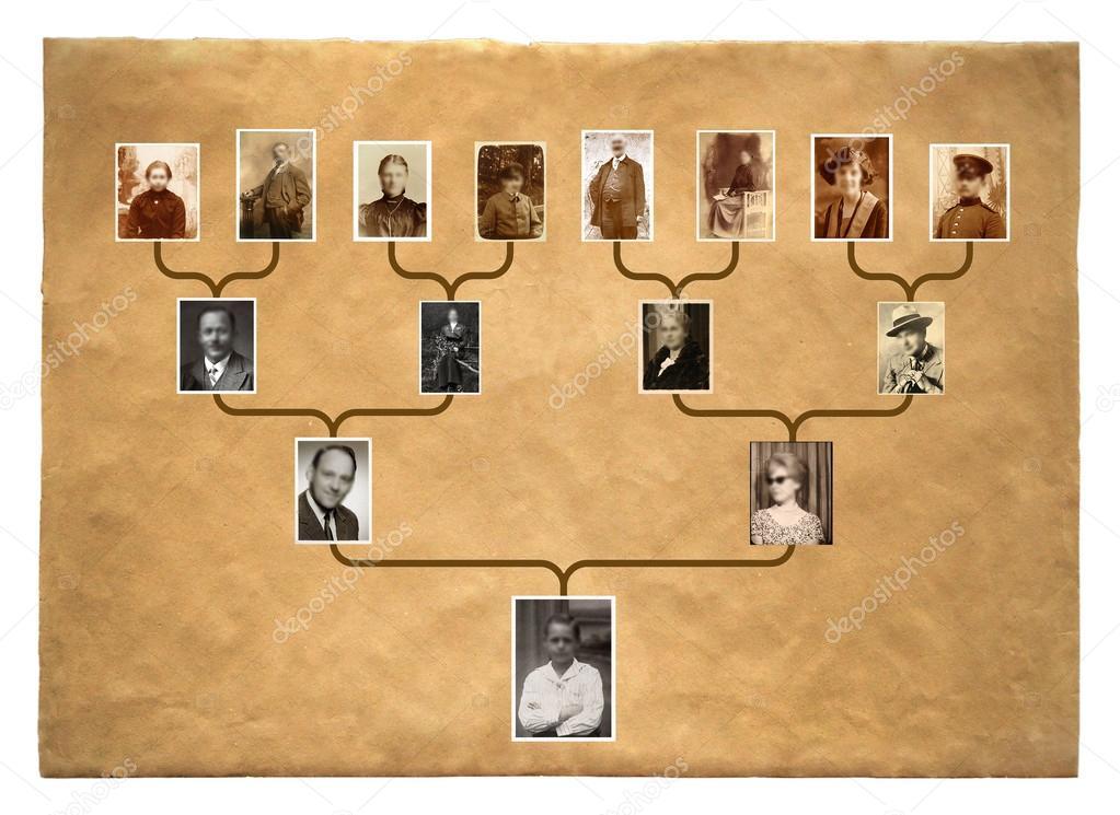 ᐈ родословная фотографии рисунки родословная картинки