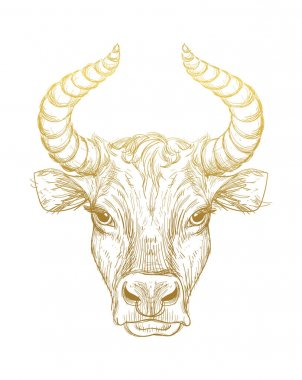 Happy New Year 2021 of the Ox, Ox-Taurus. Golden linear drawing on a white background, tarot, tattoo, chinese horoscope, astrology and zodiac signs. Vector illustration for poster, cover, calendar icon