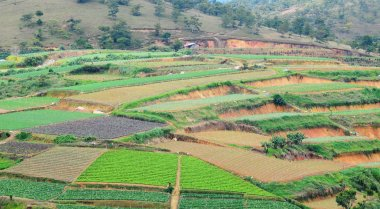Vegetable fields in highland, Dalat