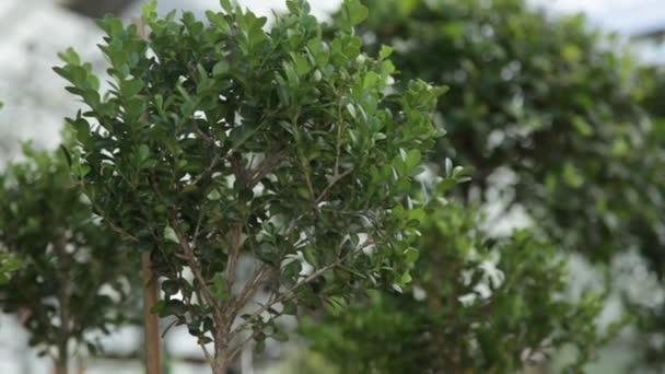 Grüne Pflanzen wachsen