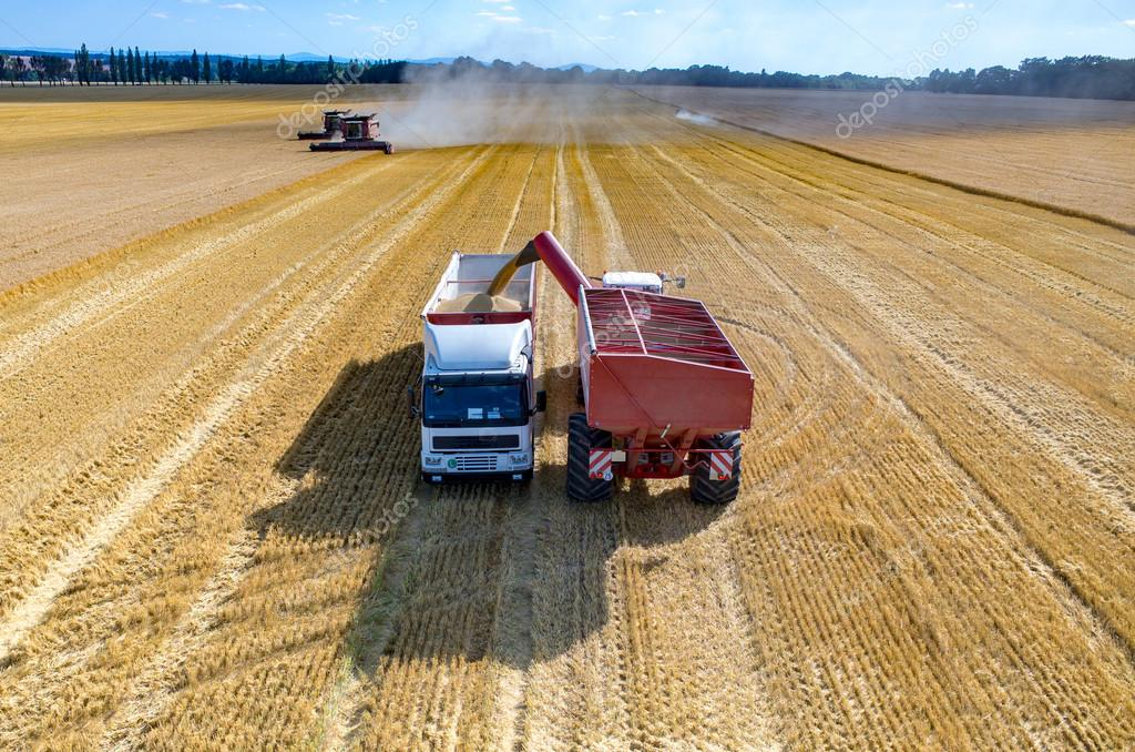 Filling the truck with wheat seeds
