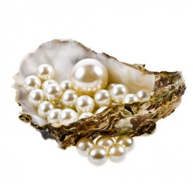 Oyster shell and pearls