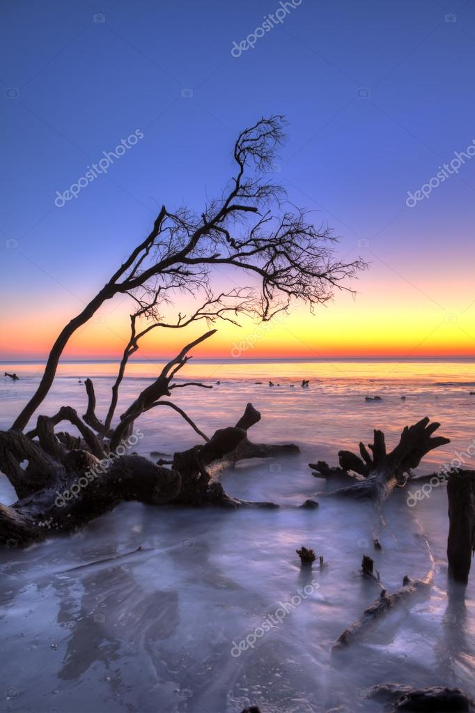 Фотообои fallen tree and ocean, hdr