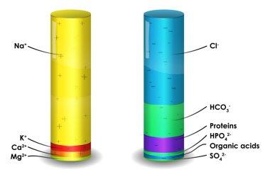 Human blood plasma ion composition