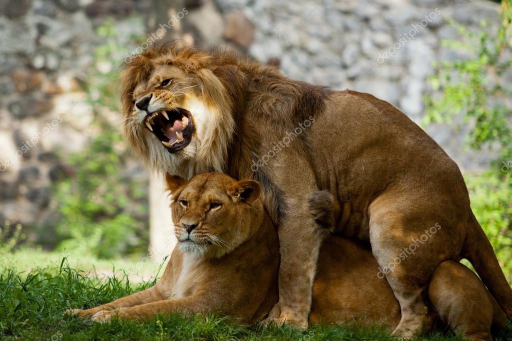 Лев любовь и секс