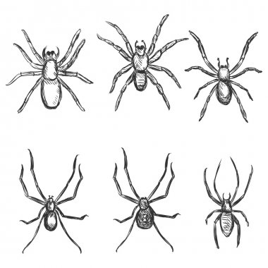 Sketch Spiders