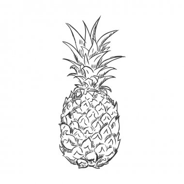 Single Sketch Pineapple