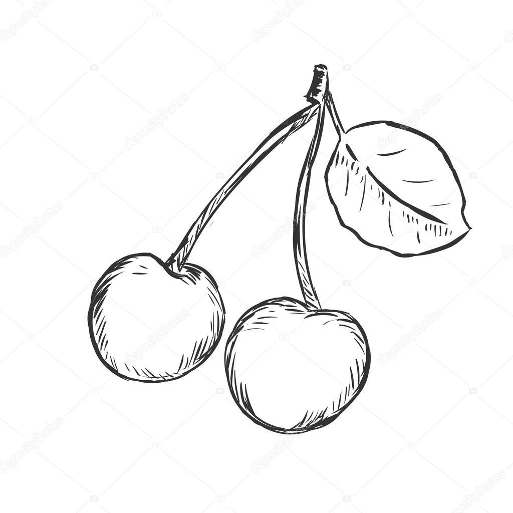 Einzigen Skizze Cherry — Stockvektor © nikiteev #63401803