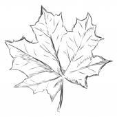 Jeden nákres javorový list