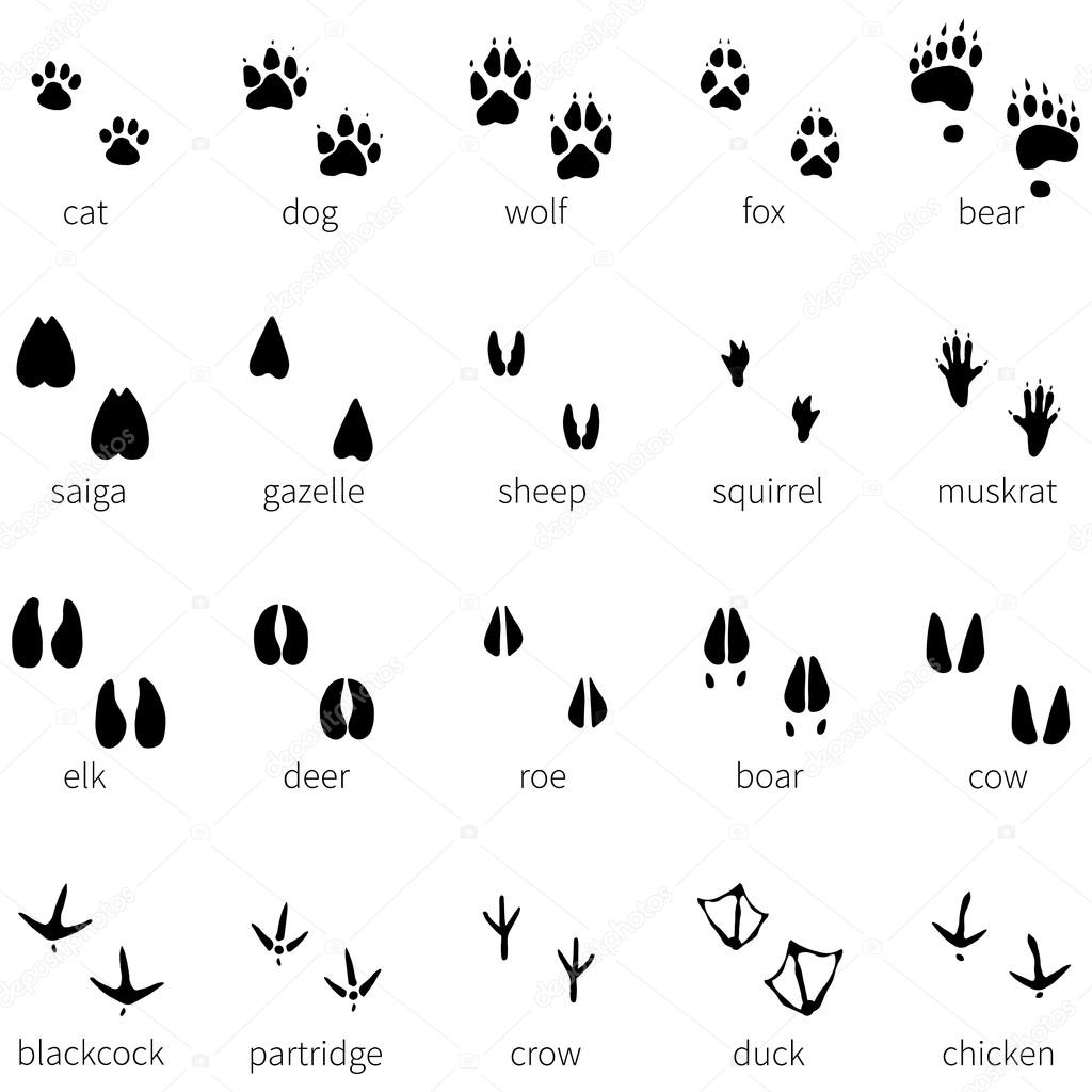 20 動物足跡アイコンのセット — ストックベクター © nikiteev #69106743