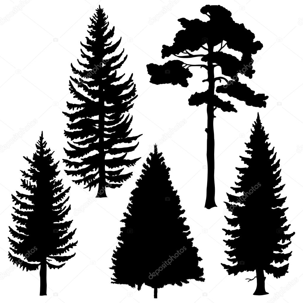 Set of coniferous trees silhouettes
