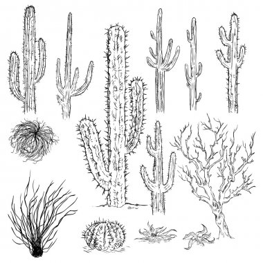 Sketch Cactuses and Desert Plants