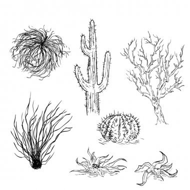 Set of Sketch Cactuses and Desert Plants