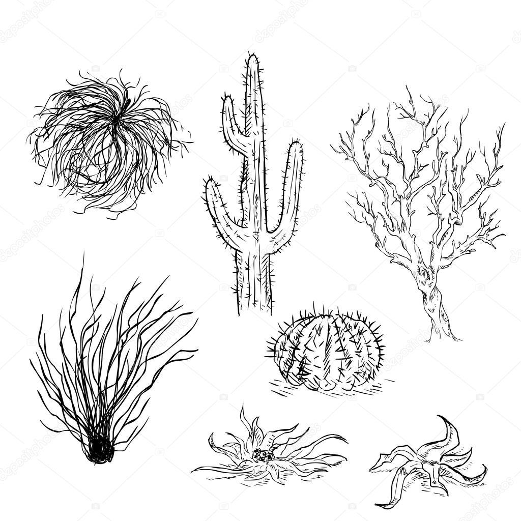 Set de dibujo cactus y plantas del desierto — Archivo ...