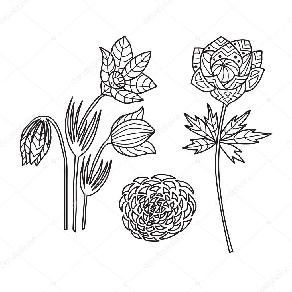 Zentangle the Baikal wildflowers for adult anti stress Coloring Page
