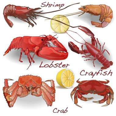 Set of sea food - shrimps, crab, lobster and so