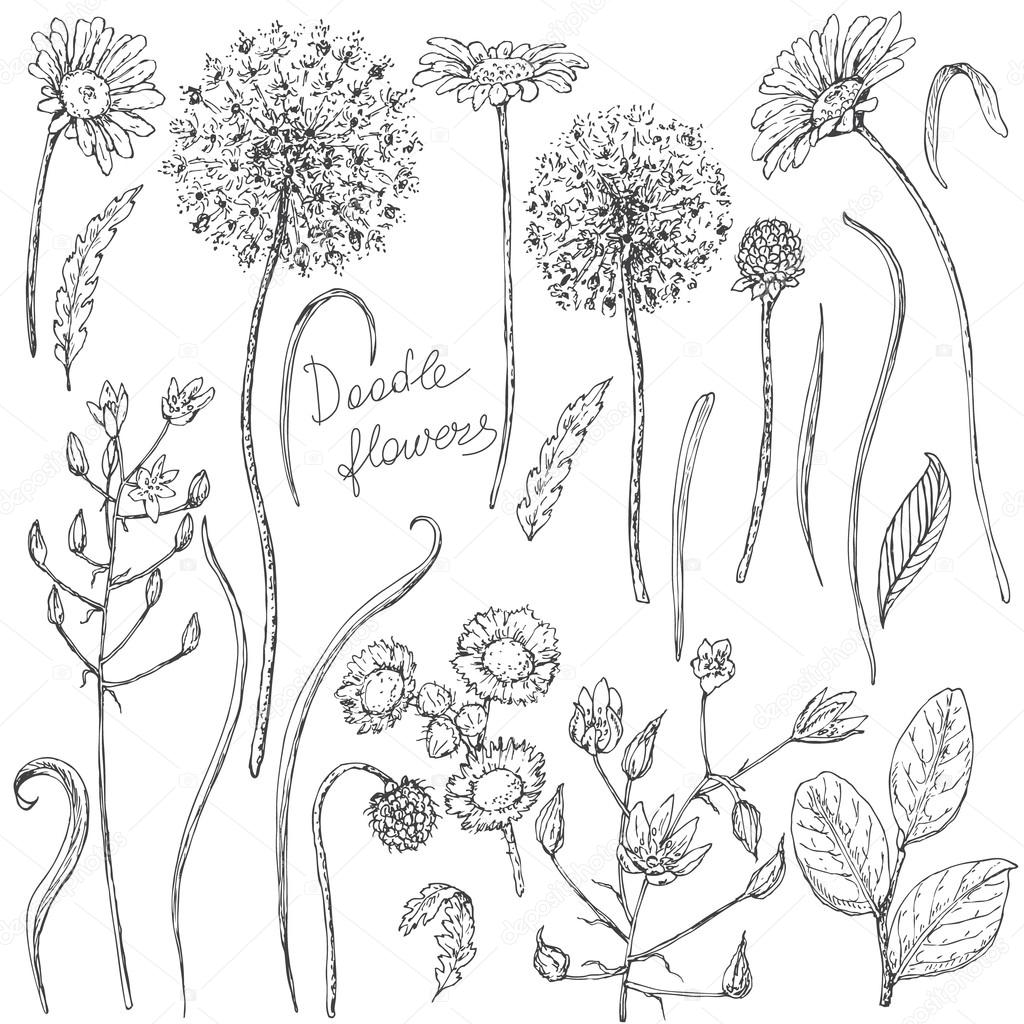 Conjunto de dibujo de flores silvestres y hojas — Archivo Imágenes ...