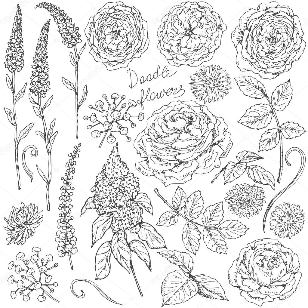 Set of flowers  and leaves sketch