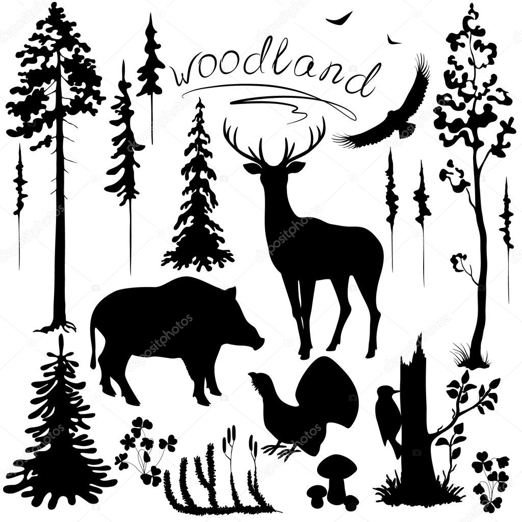 Woodland plants and animals set