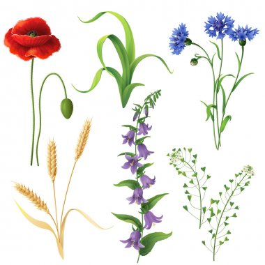 Set of different wildflowers, wheat ears and  grass  isolated on white. stock vector
