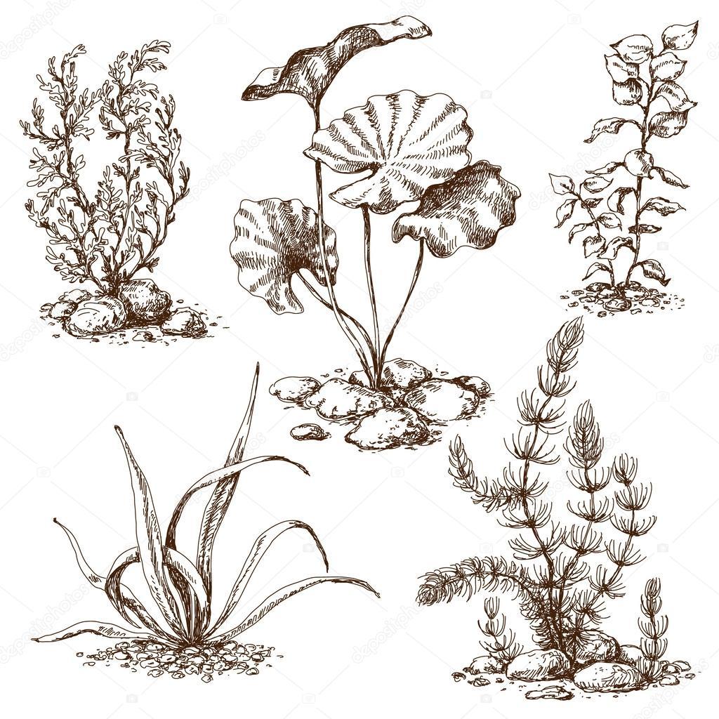 Hand drawn algae sketch