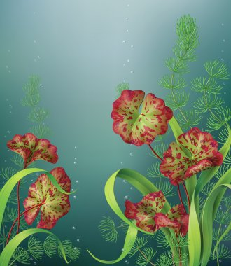 Underwater background with aquatic plants