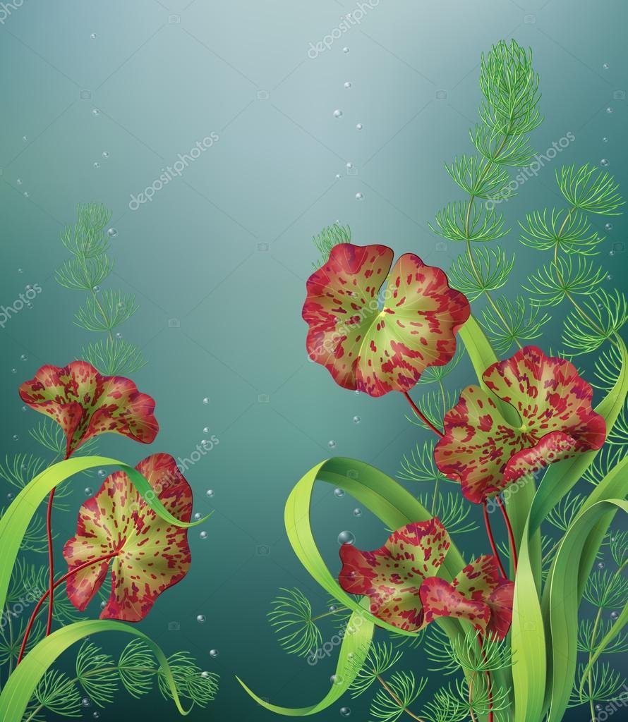Underwater background with aquatic plants