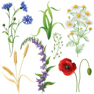 Wildflowers set. Poppy, cornflowers, chamomile, bluebell, blindweed,  wheat ears and  grass  isolated on white. stock vector