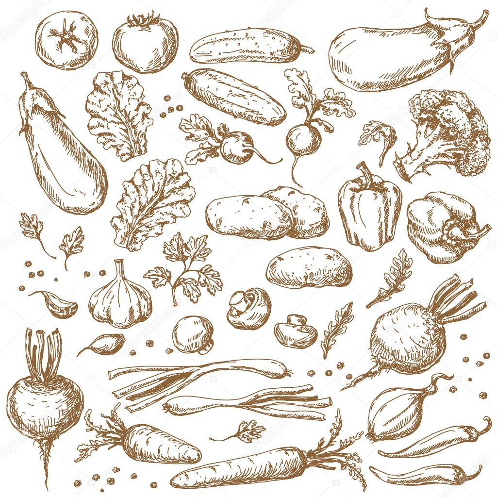 Sketch of Vegetables Set