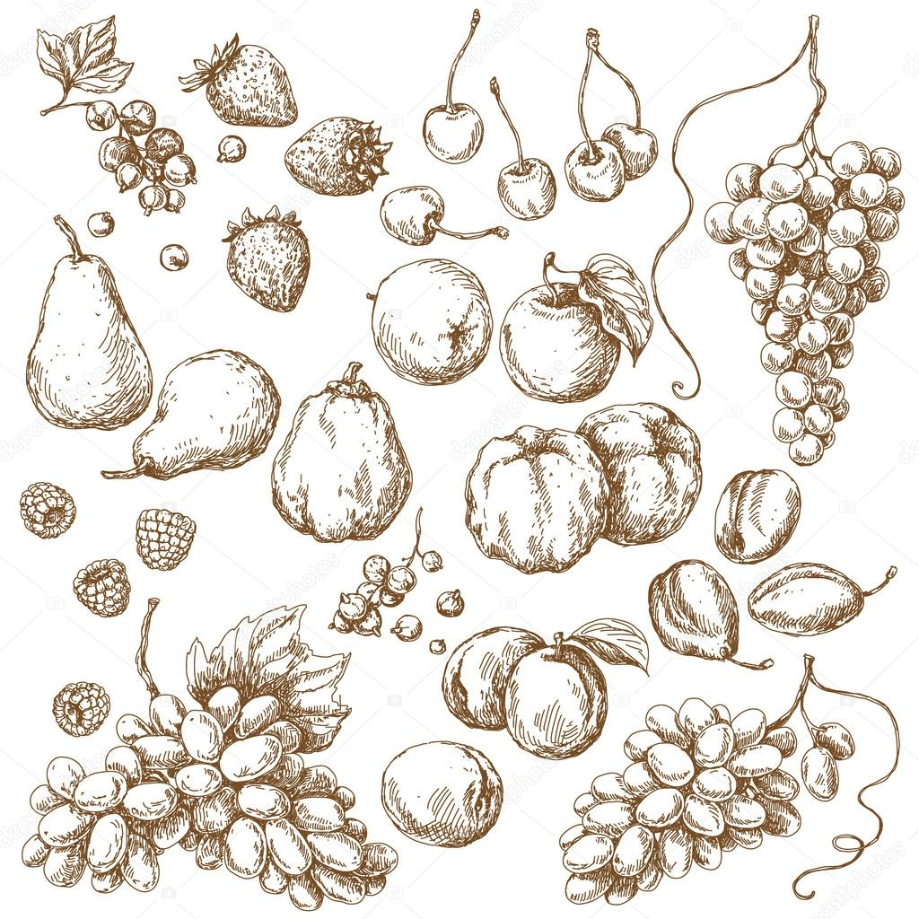 Set of Fruits  Sketch