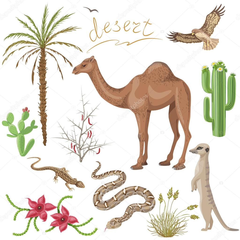 Desert plants and animals set