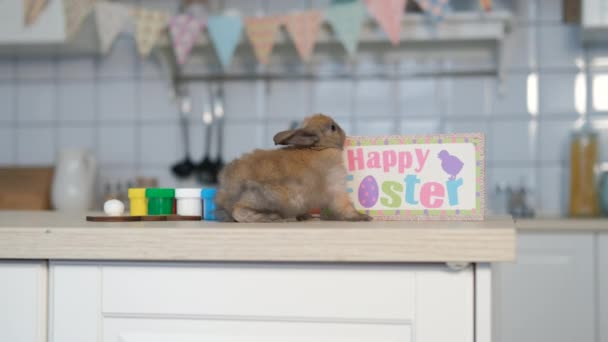 Little Easter Rabbit Sitting on Table in Kitchen