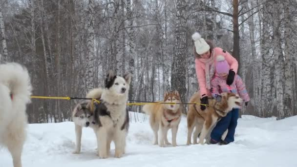 Woman with Daughter Playing with Huskies Outdoors