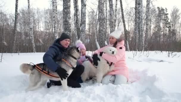 Fiatal Family Petting Sledge Dogs egy hóban