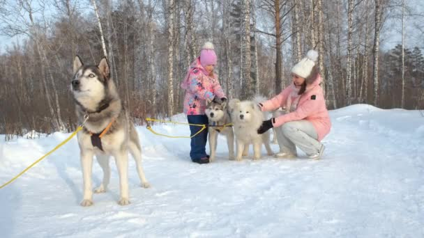Woman with Daughter Petting Huskies in Winter Day