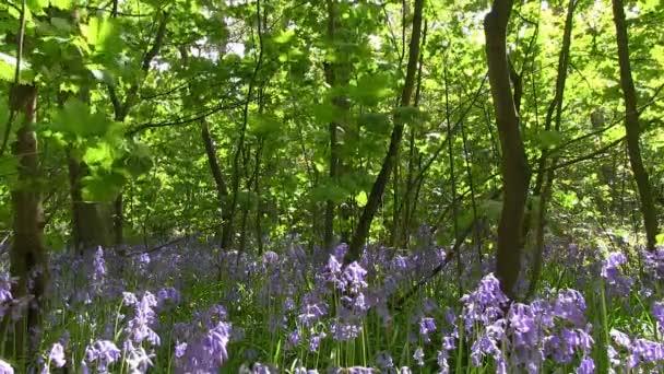 zvonky v lese