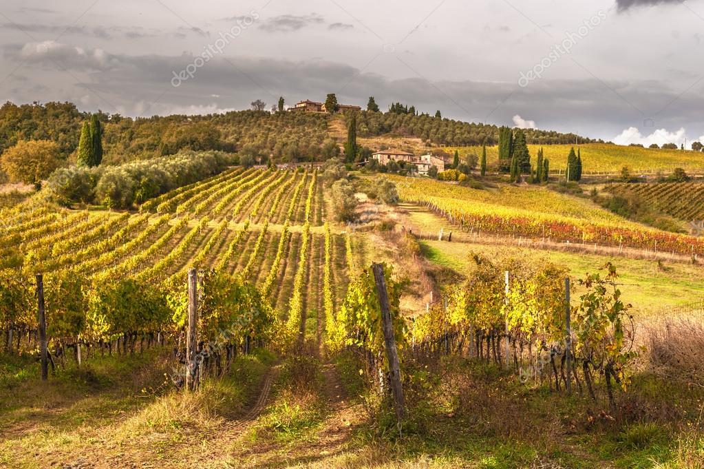 Fields of vineyards in the Italian landscape