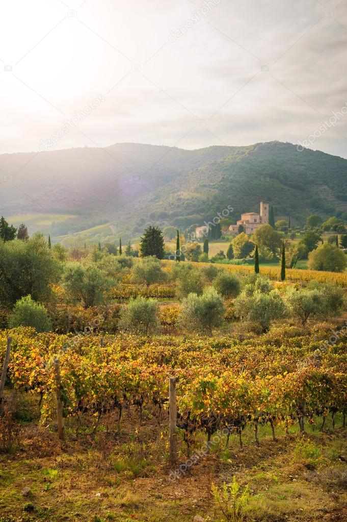 Italian medieval 'Church between vineyards, Tuscany